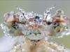 Libellenfacetten - Blaue Federlibelle - Platycnemis pennipes